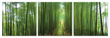 Obraz Bambusový les