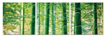 Obraz Bambusový les - lístky