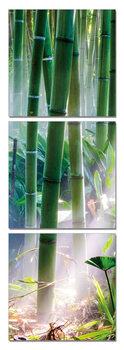 Obraz Bambusový les - sluněční paprsky