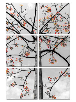 Obraz Black and White Tree with Red Leaves