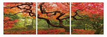 Obraz Colorful Park