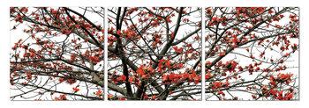 Obraz Koruna stromu na podzim