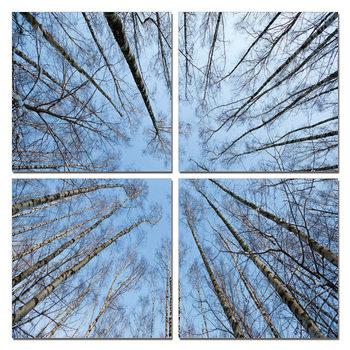 Obraz Koruny stromů