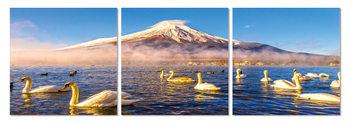 Obraz  Labutě na jezeře