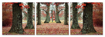 Obraz  Podzimní stromořadí