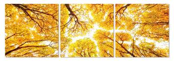 Obraz Pohled do korun stromů