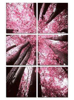 Obraz Růžová koruna stromu