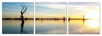 Obraz  Siluety stromů v záři vycházejícího Slunce