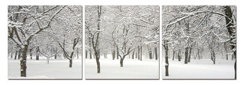 Obraz  Snowy winter sets