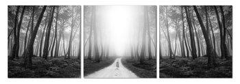 Obraz Tajemný les