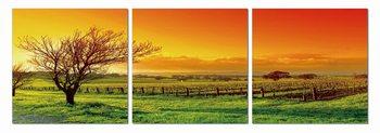 Obraz  Západ slunce nad pastvinami