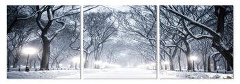 Obraz Zasněžené koruny stromu v parku