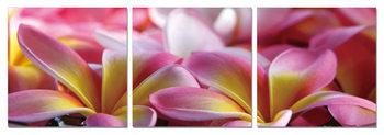 Mодерна картина Pink Blossoms