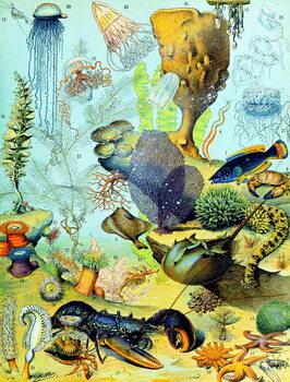 Cuadros en Lienzo Illustration of  an underwater scene  c.1923
