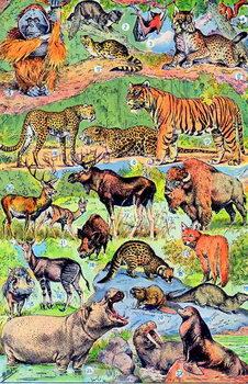 Cuadros en Lienzo Illustration of Wild Animals c.1923