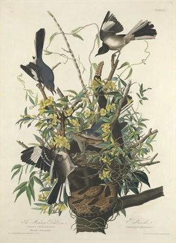 Cuadros en Lienzo The Mocking Bird, 1827