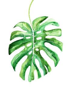 Cuadros en Lienzo Watercolor monstera leaf