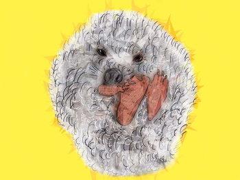Cuadros en Lienzo Wicked Spiky Hedgehog, 2019,