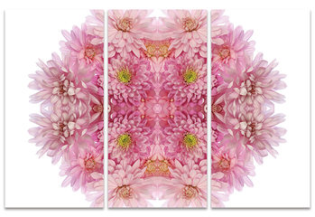 Cuadros en Lienzo Alyson Fennell - Pink Chrysanthemum Explosion