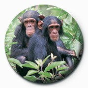 Placka CHIMPS