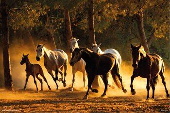 Plagát Horses Andaluces