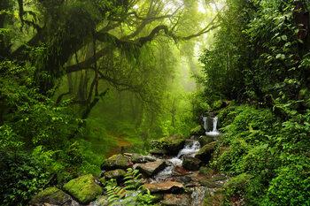 Plagát Rain Forrest