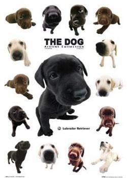 Plagát The dog