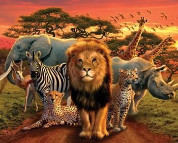 African kingdom Plakat