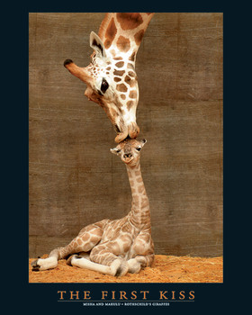 FIRST KISS Plakat