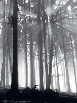 Forest Dawn  Kunsttryk