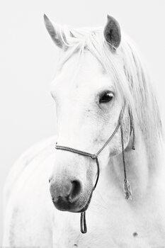 Hest - White Horse Plakat