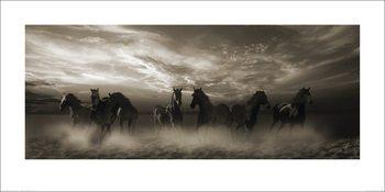 Malcolm Sanders - Wild Stampede Kunsttryk
