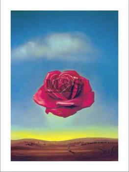 Medative rose Kunsttryk