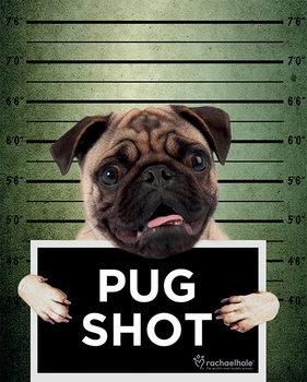 Rachael Hale - Pug Shot Banjo Plakat