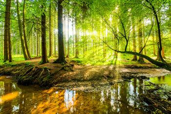 Plakat Spring Forrest