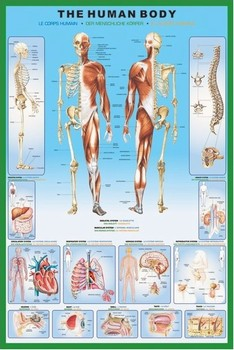 The human body Plakat