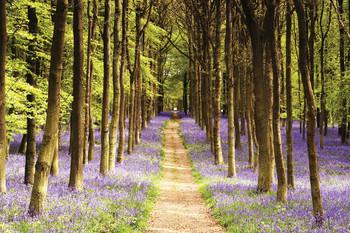 Woodland - path Plakater