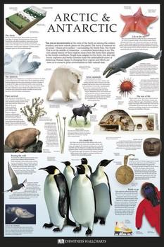 Artic & Antarctic Poster