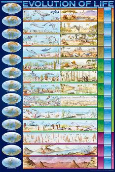 Evolution of life Poster