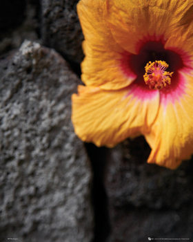 Flowers - Stone Wall Poster