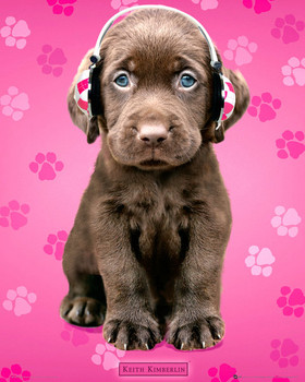 Keith Kimberlin - chocolate labs headphones Poster