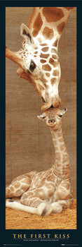 The first kiss - giraffes Plakat