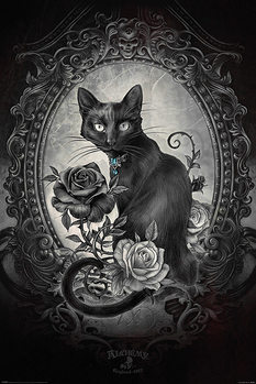 Alchemy - Paracelcus Plakát