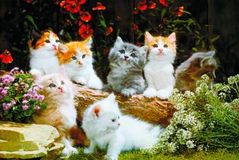 Baby cats Plakát
