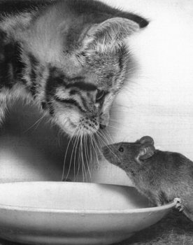 Cat and mouse - paul kaye Plakát