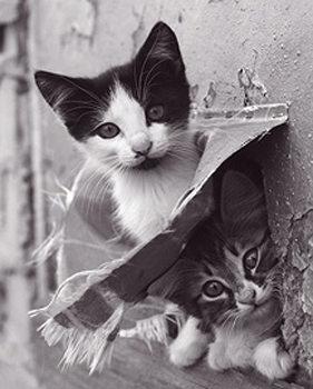 Cica - két Plakát
