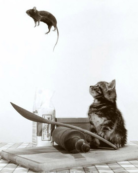 Don't play with your food - cat & mouse Plakát