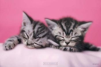 Keith Kimberlin - pink kitten Plakát