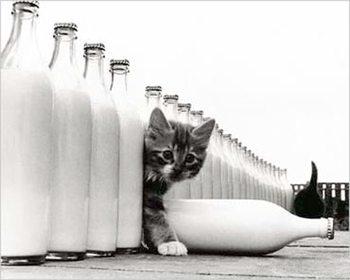 Kitten - in paradise Plakát