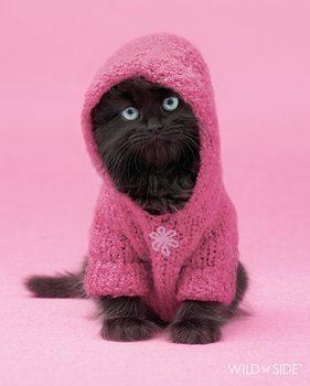 Kitten - wildside Plakát